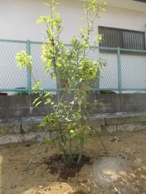 arakashi-e1460198199191