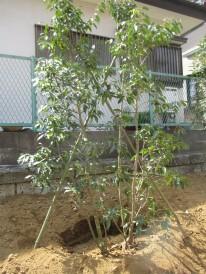 soyogo-e1460198190714